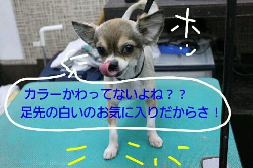 b0130018_12492415.jpg