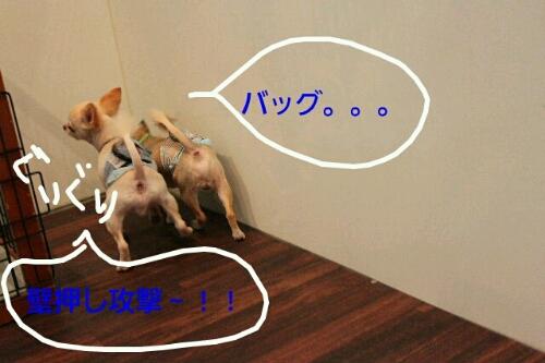 b0130018_12514426.jpg