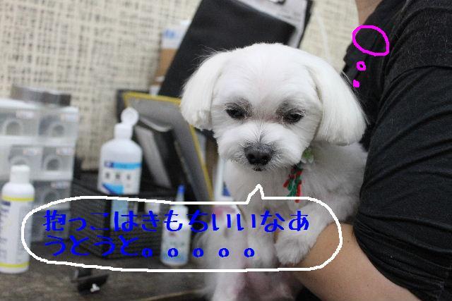 b0130018_16582116.jpg