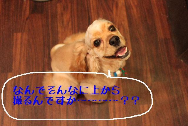 b0130018_1701019.jpg