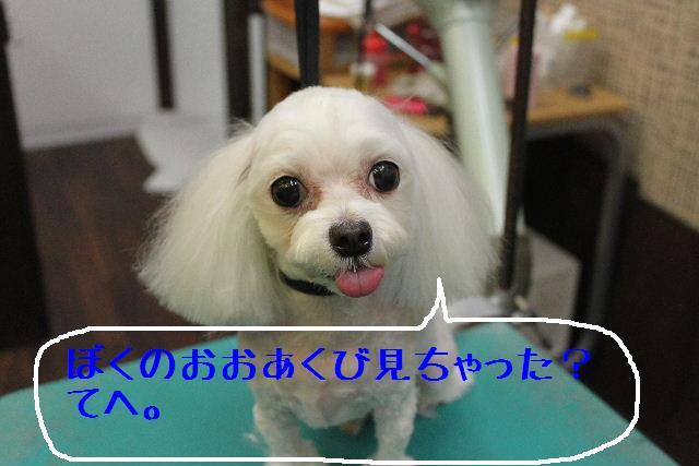 b0130018_17104188.jpg