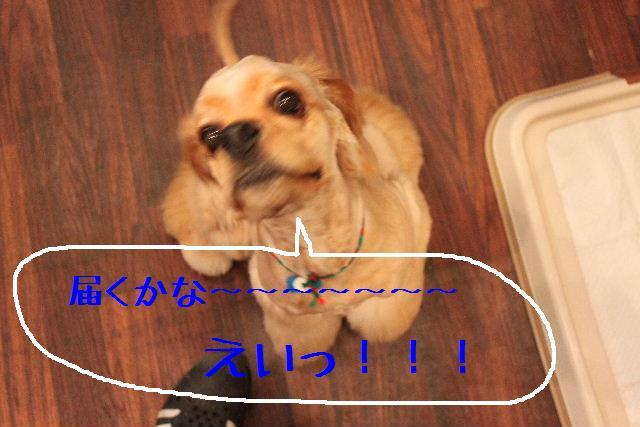 b0130018_176483.jpg