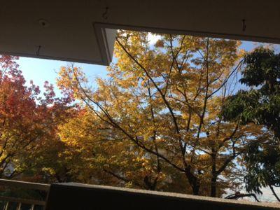秋、金沢、蟹!_d0123425_8283020.jpg