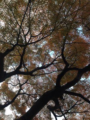 秋、金沢、蟹!_d0123425_8284272.jpg