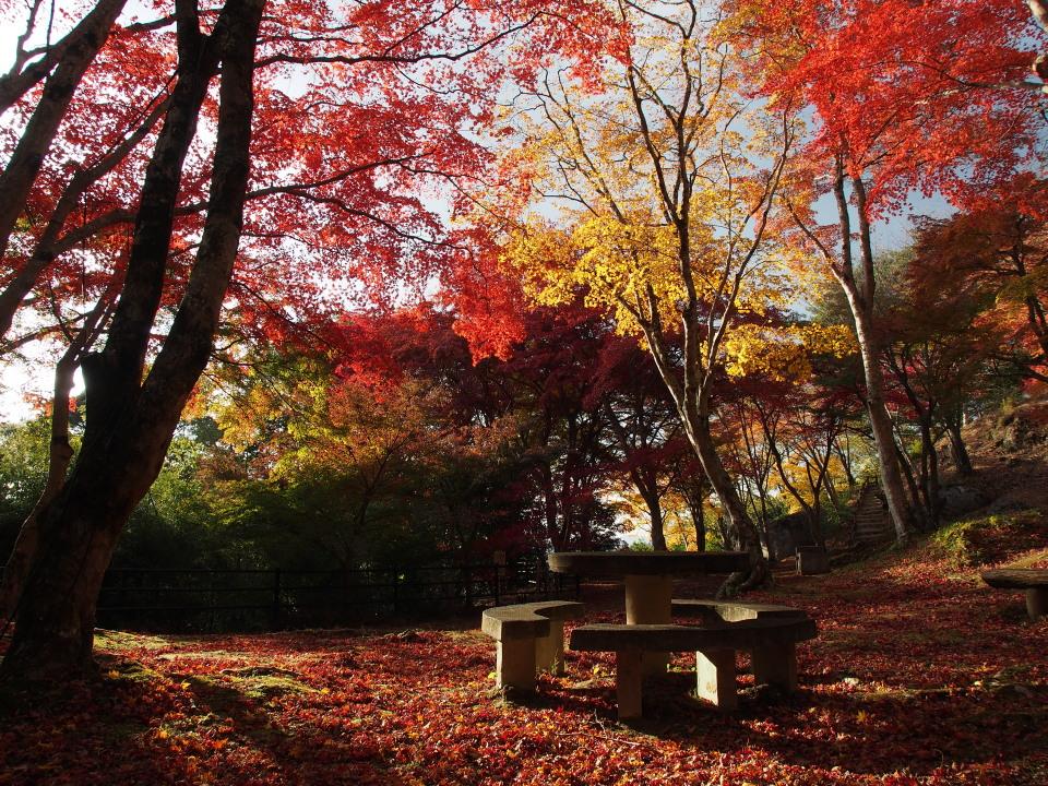 笠置山もみじ公園_a0203733_2031721.jpg