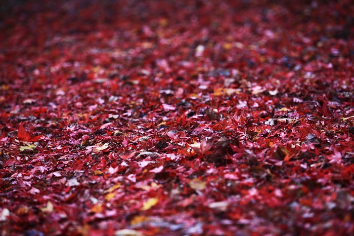 赤絨毯_a0294534_21473821.jpg