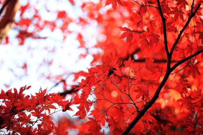 赤絨毯_a0294534_21492230.jpg