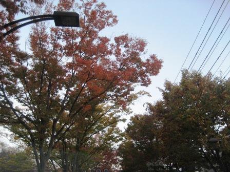 ちょっと寒いけど・・・・・・穏やかな天気ですね・・・・・_c0206545_10385955.jpg