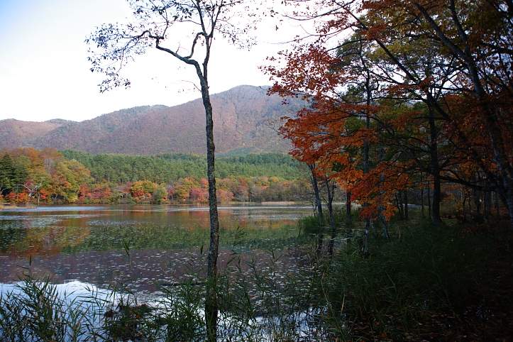 下郷町 観音沼自然公園の紅葉 その2_e0165983_1731237.jpg