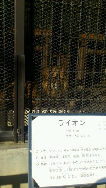 休日。動物園へ行く。_e0326688_15351640.jpg