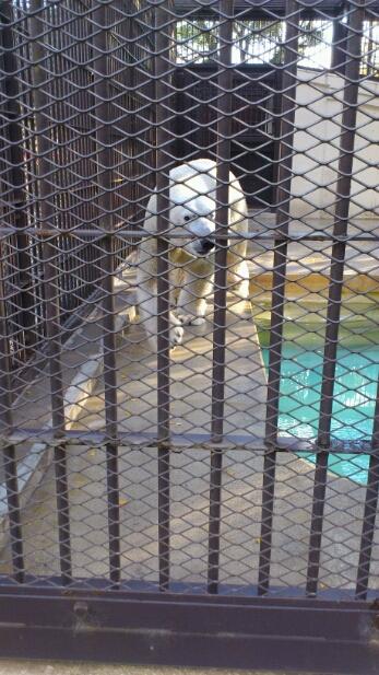 休日。動物園へ行く。_e0326688_1541093.jpg