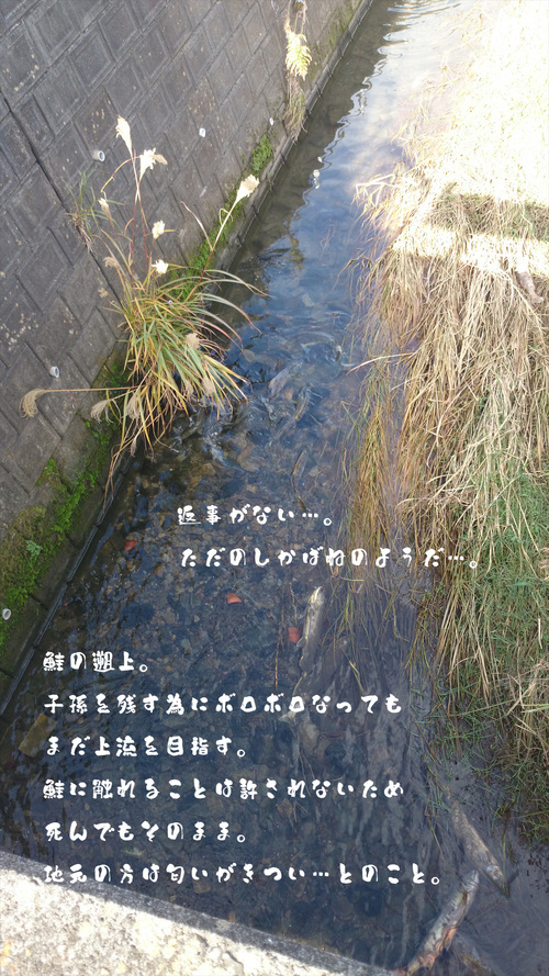 a0093189_045836.jpg
