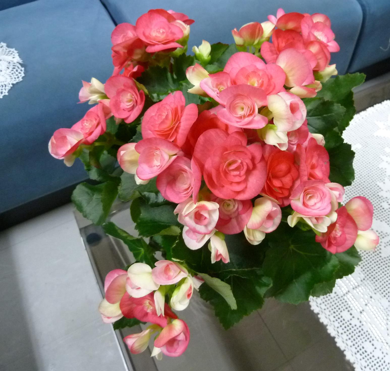 冬の花もぼちぼち。_f0166694_11312710.jpg