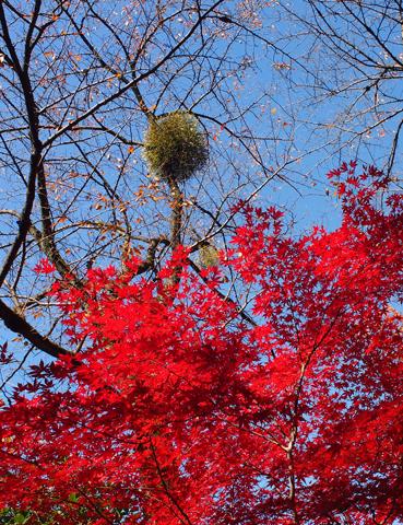 紅葉の平林寺_e0124597_17435976.jpg