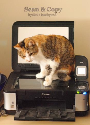 猫をスキャン&コピーしたら_b0253205_274266.jpg