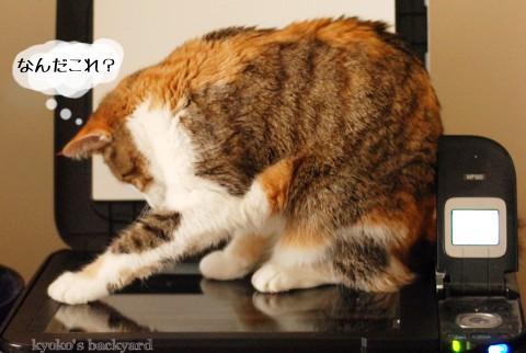 猫をスキャン&コピーしたら_b0253205_282496.jpg
