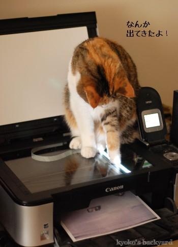 猫をスキャン&コピーしたら_b0253205_294466.jpg