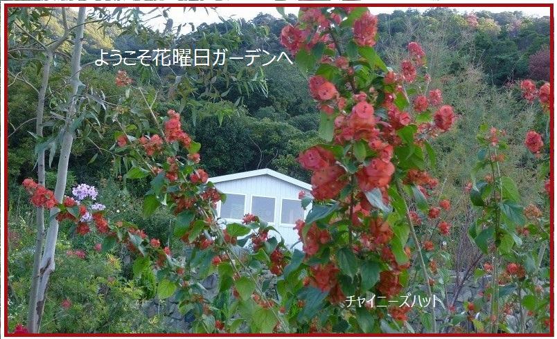 d0172010_7251261.jpg