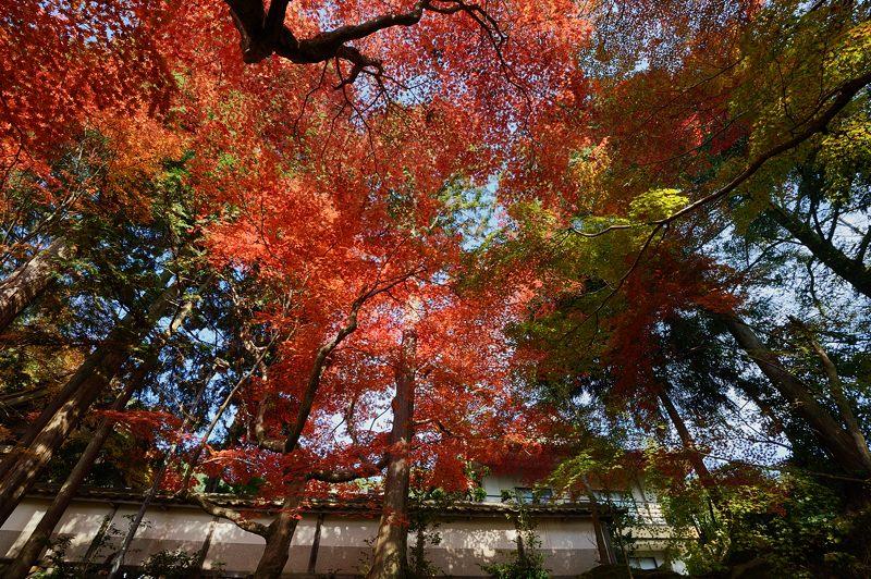 2013京都の紅葉!・内緒のお寺_f0032011_19503381.jpg