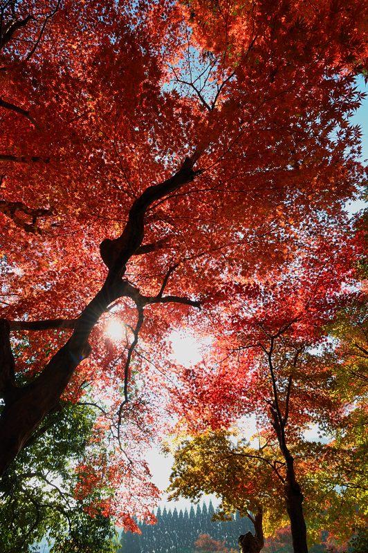 2013京都の紅葉!・内緒のお寺_f0032011_19541385.jpg