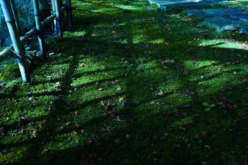 2013京都の紅葉!・内緒のお寺_f0032011_195537.jpg