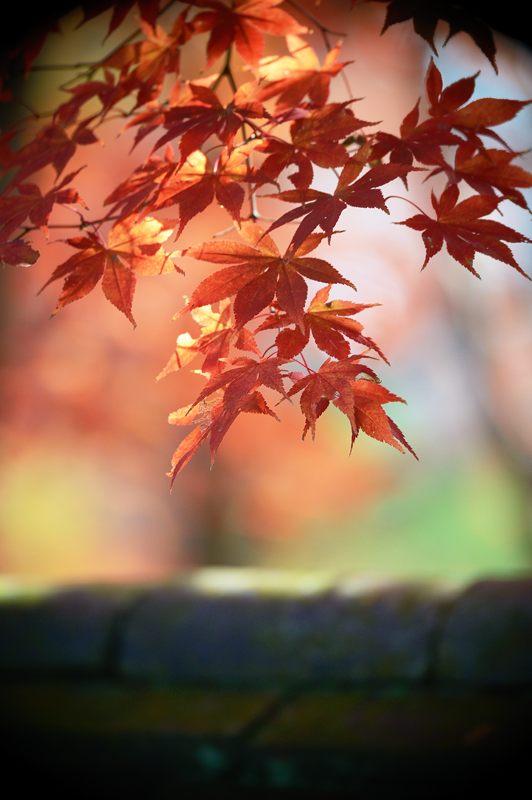2013京都の紅葉!・内緒のお寺_f0032011_19564411.jpg