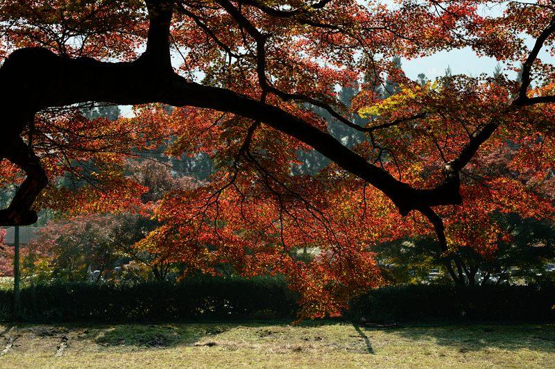 2013京都の紅葉!・内緒のお寺_f0032011_1957198.jpg