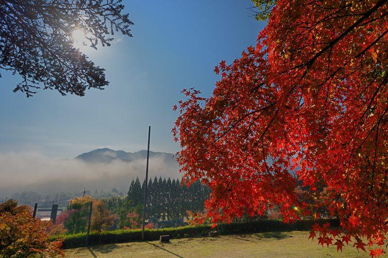 2013京都の紅葉!・内緒のお寺_f0032011_1957333.jpg