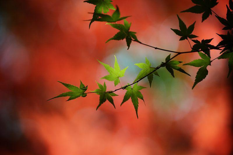 2013京都の紅葉!・内緒のお寺_f0032011_1958277.jpg