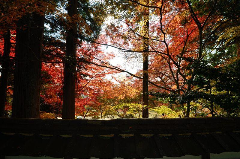 2013京都の紅葉!・内緒のお寺_f0032011_19583670.jpg