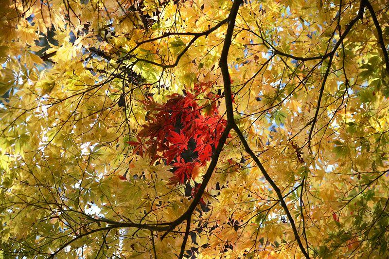 2013京都の紅葉!・内緒のお寺_f0032011_1959210.jpg