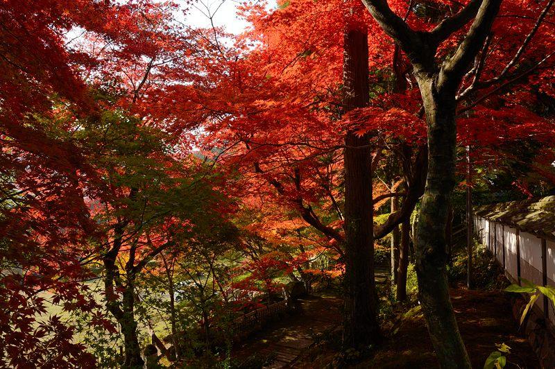 2013京都の紅葉!・内緒のお寺_f0032011_19592593.jpg