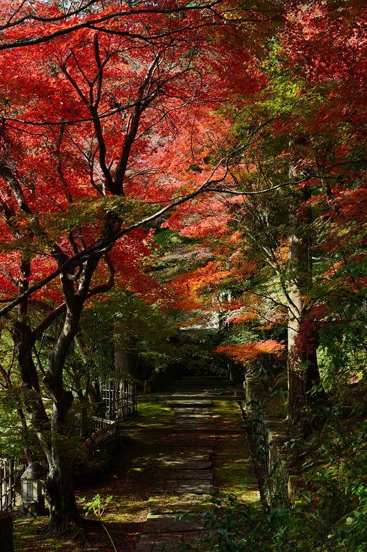 2013京都の紅葉!・内緒のお寺_f0032011_19593313.jpg