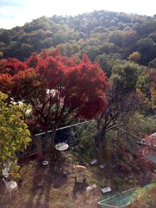 紅葉の季節_e0103024_13214248.jpg