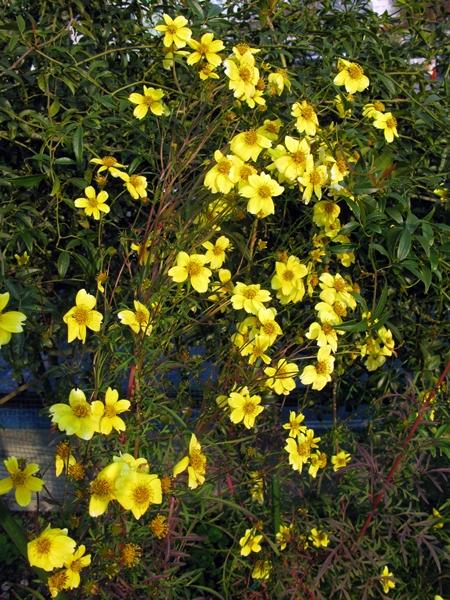 初冬の庭_f0129726_22213020.jpg