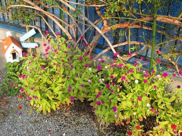 初冬の庭_f0129726_2222946.jpg