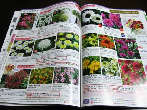 初冬の庭_f0129726_22392348.jpg