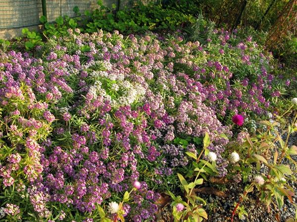 初冬の庭_f0129726_22543689.jpg