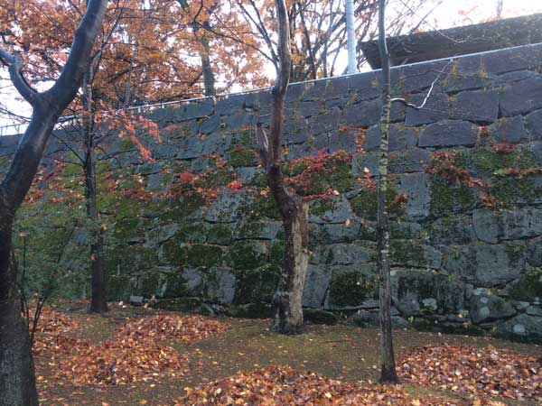 木々の葉も残りわずか_f0154626_181276.jpg