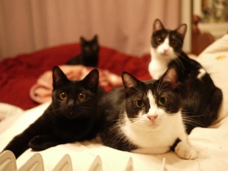 なかよしにゃん猫 らぃらぎゃぉすてぃぁらみるきぃ編。_a0143140_18494972.jpg