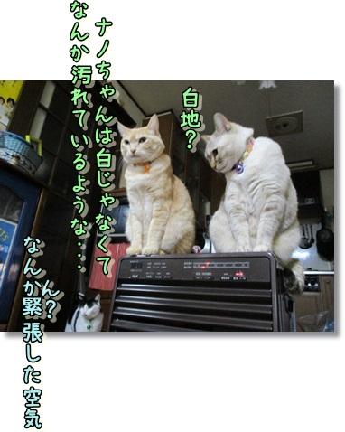 b0151748_11334912.jpg