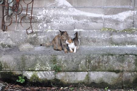 近所のネコ 2_a0134952_2136466.jpg