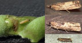 害虫の成虫達 _f0018078_17585420.jpg