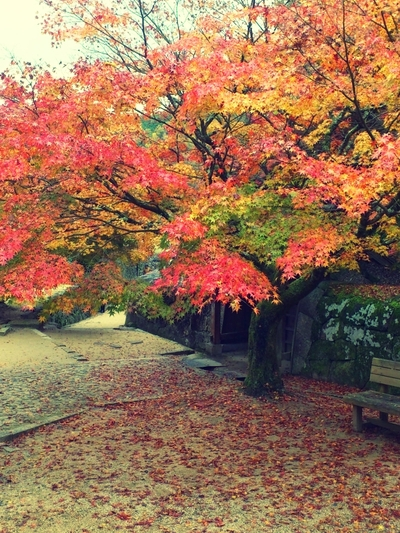 紅葉と丸焼きと宣言_a0235880_2040245.jpg