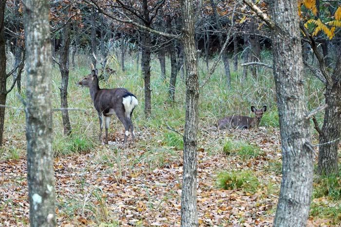又、鹿に会いました。_e0016894_855208.jpg
