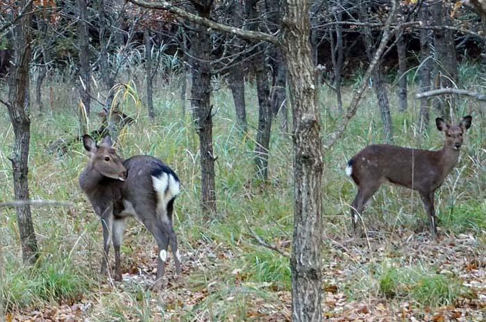 又、鹿に会いました。_e0016894_857138.jpg