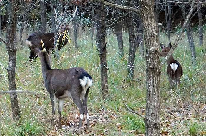 又、鹿に会いました。_e0016894_8581184.jpg