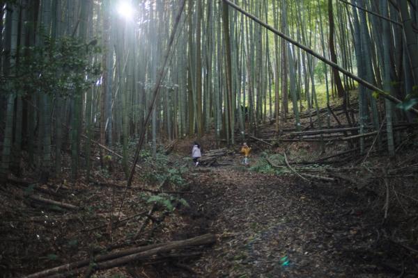森を散歩_f0120395_1712795.jpg