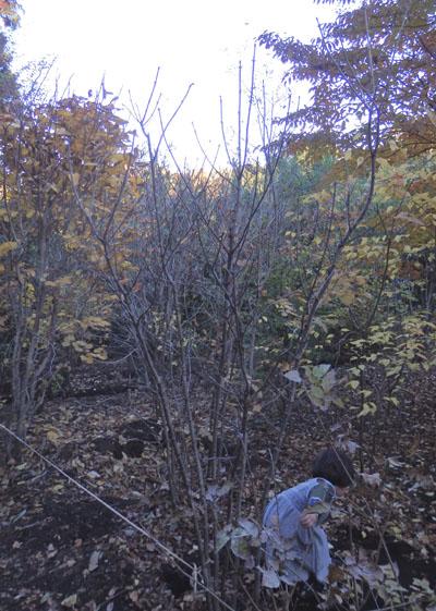 シンボルツリーを探しに生駒植木さんへ_b0183404_21473422.jpg