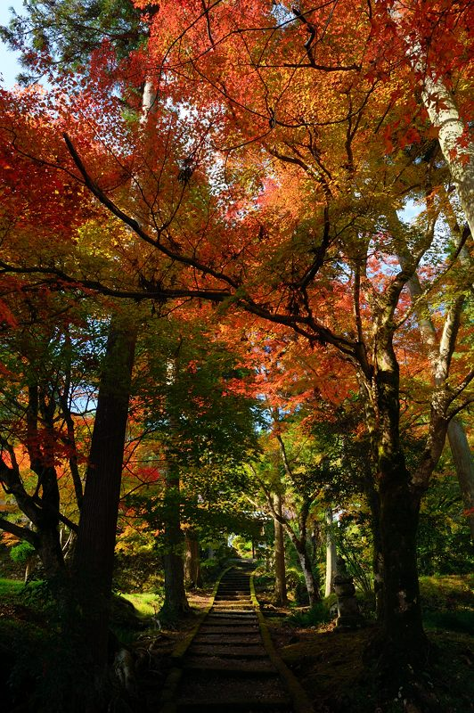 2013京都の紅葉!・龍穏寺_f0032011_162299.jpg